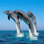 http://avatarko.ru/avatars/zhivotnie/delfini.jpg
