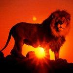 http://avatarko.ru/avatars/zhivotnie/lion_sun.jpg