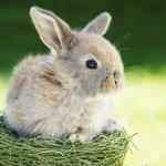 http://avatarko.ru/avatars/zhivotnie/little_rabbit.jpg