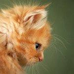 http://avatarko.ru/avatars/zhivotnie/rizhii_kotik.jpg