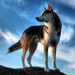 http://avatarko.ru/avatars/zhivotnie/volk_na_kamne.jpg