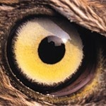Красивый глаз птицы, аватар с птичьим глазом