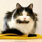Симпатичный кот на аватаре, скачать аватар с котом