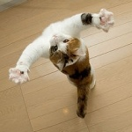 Прикольный кот с поднятыми вверх лапами