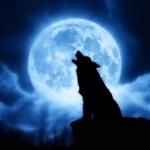 Силуэт воющего на голубую луну волка