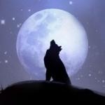Силуэт волка на фоне огромной Луны