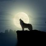 Волк на фоне круглой луны воет, задрав вверх голову