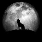 Чёрно-белая картинка с силуэт волка на фоне луны
