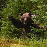 Медведь высовывается из кустов и кричит непристойности