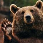Медведь приветливо машет лапой