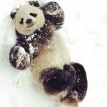 Картинки с пандами прикольные