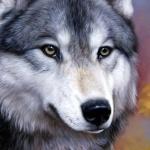 Нарисованная морда серого волка с блестящим носом