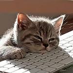 Сонный котёнок с лапой и головой на клавиатуре