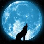 Силуэт воющего волка на фоне огромной луны голубого цвета