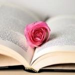 Розовая роза в открытой книге
