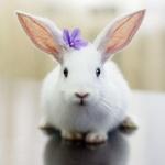 Белый кролик с фиолетовым цветочком на голове