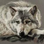 Рисунок лежащего волка с чёрным блестящим носом