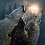 Три волка хором воют на луну