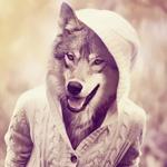 Картинка волка в человеческой одежде с капюшоном. Скачать прикольную аватарку с волком.