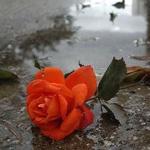 Печальный аватар с красной розой в луже на асфальте