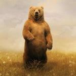 Картинка со стоящим на задних лапах в поле медведем