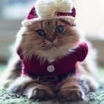 Фото кота в костюмчике и шапочке на аву