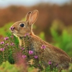 Заяц нюхает маленькие цветочки с задумчивым видом