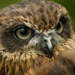Почему совы охотятся ночью и как им это удаётся?