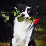Животные   Цветы   Собаки   аватар