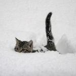 Котёнок плывёт в сугробе