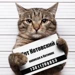 Животные, Коты, Прикол, Надписи, аватар