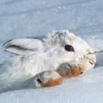 Животные | Снег | аватар
