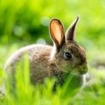 Длинноухий любитель моркови прячется в траве