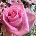 Розовая роза среди других цветов розового и белого цвета
