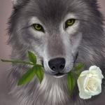 Серый волк держит белую розу в зубах