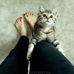 Кот грациозно танцует с ногой девушки