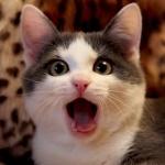 Кошка с открытой от удивления пастью
