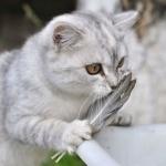 Кот с перьями в лапе
