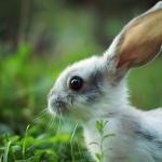 Маленький зайчик в траве