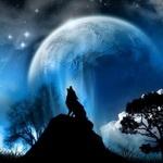 Силуэт воющего волка на большом камне
