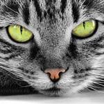 Полосатый кот с зелёными глазами лежит на полу