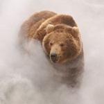 Бурый медведь в густом дыму