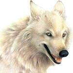 Животные, Волки, аватар