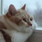 Кот с пухлыми щёчками задумчиво смотрит в окно