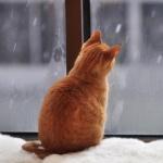 Рыжий котик наблюдает за снегом за окном