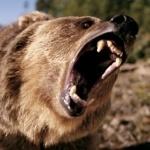 Медведь может проглотить Биг тейсти