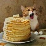 Фото кота с открытой пастью рядом со стопкой блинов