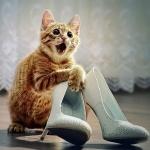 Рыжая кошка в восторге от новой обуви хозяйки