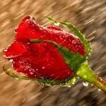 Цветы | аватар