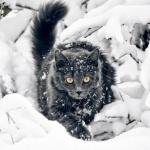 Кот выбирается из под заваленных снегом веток